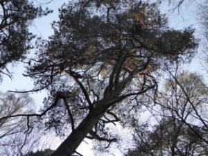 Trädvandring i det gröna vårlandskapet
