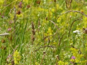 En vandring i blommornas hemliga liv
