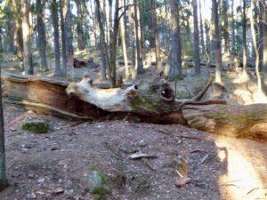 Skogens väsen, spännande natur och trollskog!