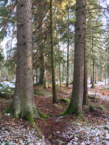 Vinteryoga i Djurgårdsskogen och guidning i Djurgårdens historiska spamiljöer